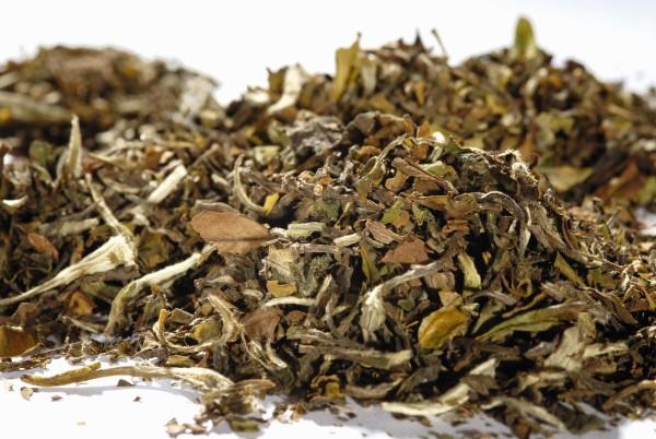 Weißer Tee - Feine Guave, lose